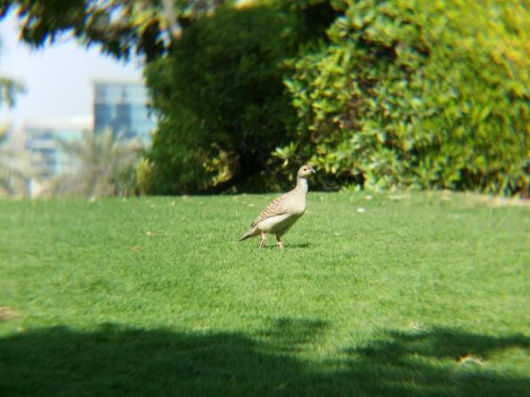 Birds value their privacy